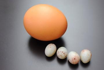 Uovo di gallina e uova di passero