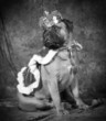 Detaily fotografie spoiled dog