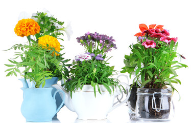 Flowers in decorative pots isolated on white