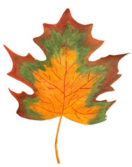 Decorative maple leaf in hand isolated on white