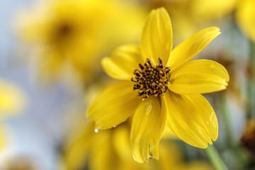 Cute Yellow Flower
