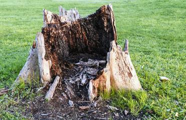 Giant Rotten Tree Stump