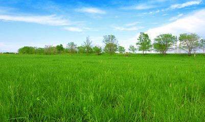 Green field under blue clouds sky