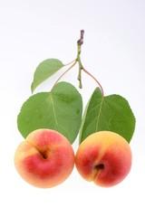 Ripe apricot closeup