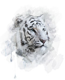 Fototapety White Tiger