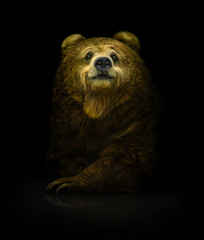 Smiling brown bear on a dark background
