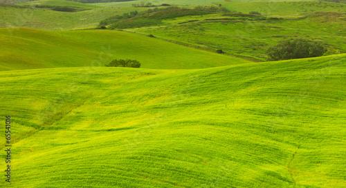 Green hills of Tuscany, Italy © Shchipkova Elena