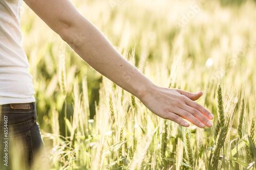 Leinwandbild Motiv Wheat