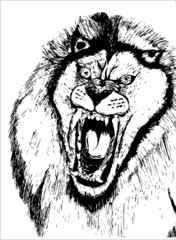 hand drawn roaring lion head