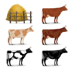 Vector Cow Icons