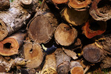 close up big woodpile from red wood poster