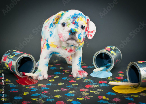 Painted Pooch - 65554671