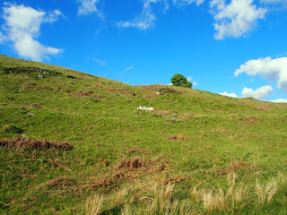 Blue sky and green hill, Dumyat, Stirling