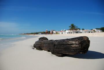 Un tronco spiaggiato