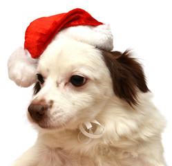 Christmas dog with Santa Claus