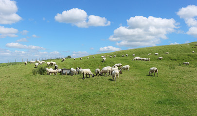 An English Rural Landscape with Grazing Sheep