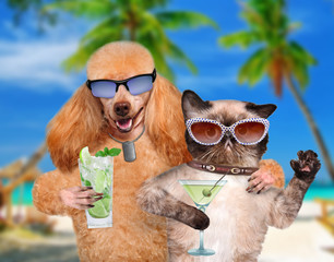 Dog with a cat on vacation.