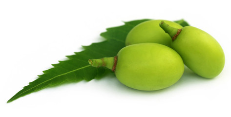 Medicinal neem fruits