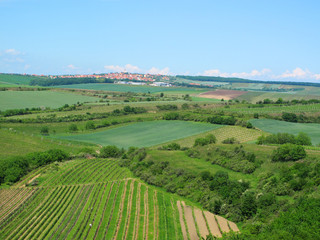 Vineyard landscape with town Velke Pavlovice, South Moravia.
