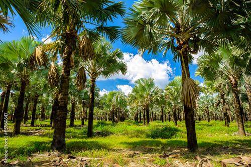 Papiers peints Palmier Palm trees