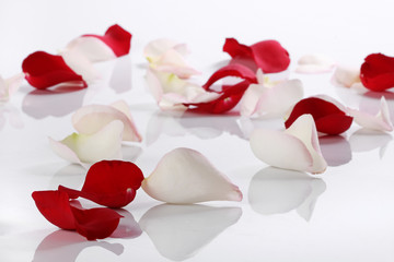 Lots of rose petals over white background