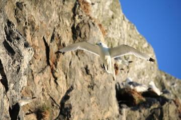 gabbiano in volo uccello marino