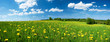 Field with dandelions and blue sky - 65563868