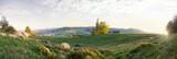 Panorama von grünen Hügeln und Wiesen