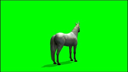 Unicorn stands and looks around  - green screen