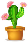 A cactus plant with pink flowers