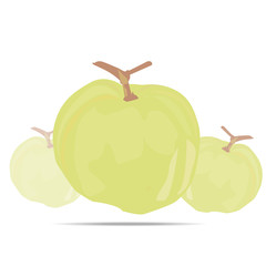 Guava fruit vector