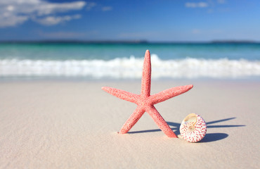 Sea star and seashell on the seashore
