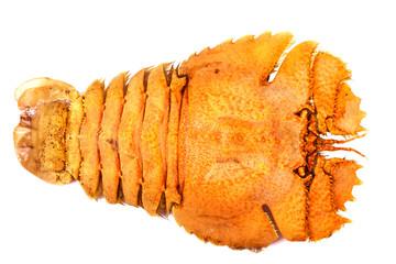 mantis shrimp in isolated on white