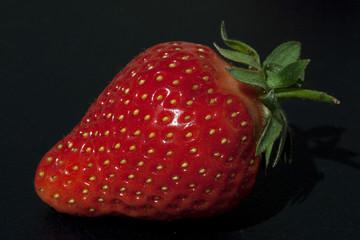Erdbeere, Fragaria x ananassa, Beerenobst,