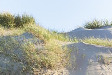Normandy dune