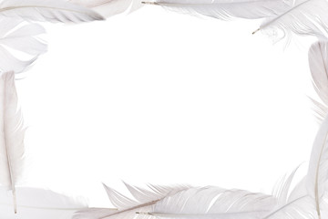 isolated white feathers frame