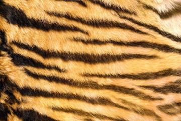 wild feline  textured fur