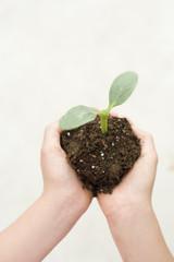 植物の苗を持つ手