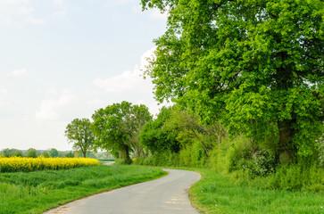 Baumreihe in Marschlandschaft im Frühling