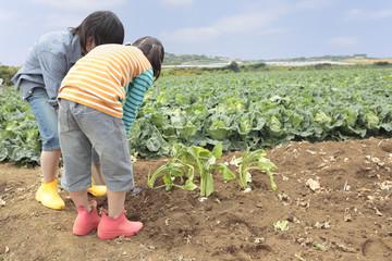 畑で作物に水をやる男の子と女の子