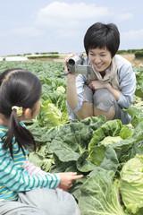 キャベツ畑で娘を撮影する母