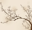 Plum blossom with line design, vectorized brush painting.