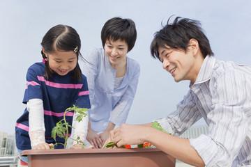 プランターの植物を観察する親子3人