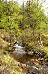 mountain stream in Glen Lyon