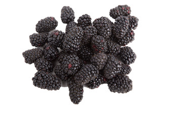 Fresh Blackberries on White Background