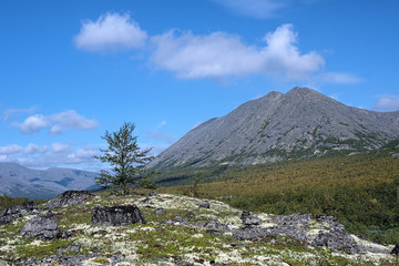 Kuelporr Mount and small birch in Khibiny Mountains