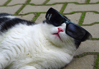 Portrait of funny cat with sunglasses