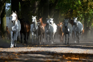 Galloping horses at pasture