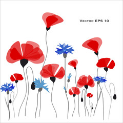 Poppies and cornflowers vector illustration