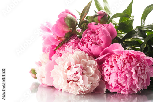 beautiful blooming peonies